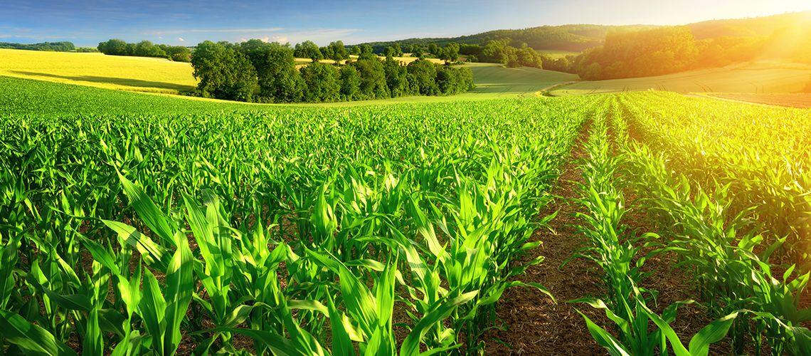 Tornano le agevolazioni nell'acquisto di terreni agricoli e montani